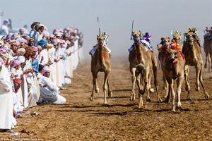 Фотограф Джейсон Эдвардс - верблюды под управлением жокеев-роботов