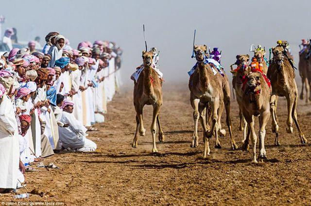 Фотограф Джейсон Эдвардс - верблюды под управлением жокеев-роботов.