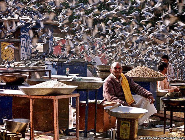 Фотограф Мерисса Куек - фото продавца зерна в Джайпуре, Индия.