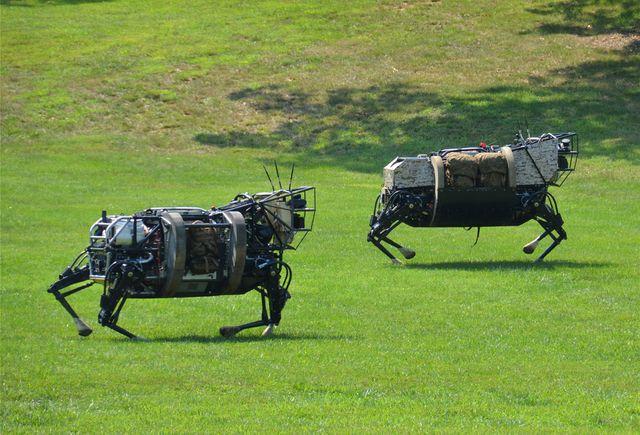 Два четвероногих робота, бегущих через поле во время тестирования