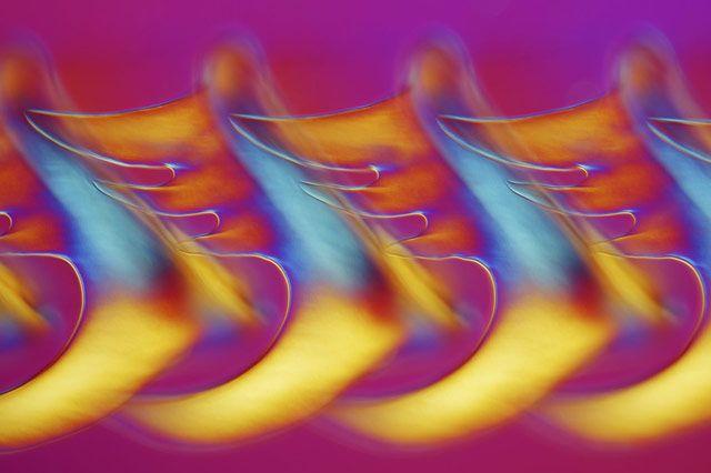 Radula (режущий орган) моллюска Buccinum undatum (брюхоногие) (200x)