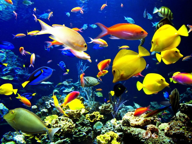 Coral_reef_life_Fish_wallpapers_1