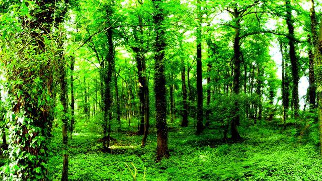 Почему зеленый цвет успокаивает