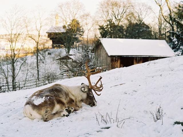stockholm-winter-15_1