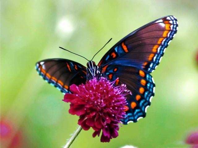 8766620-butterfly_1