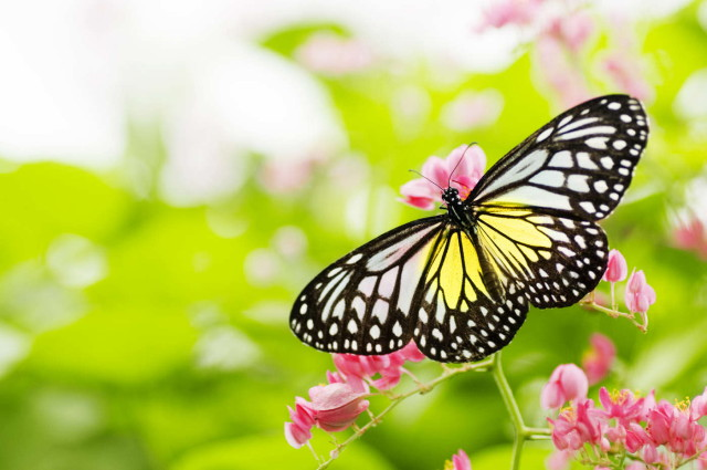 8834567-butterfly-on-flower_1