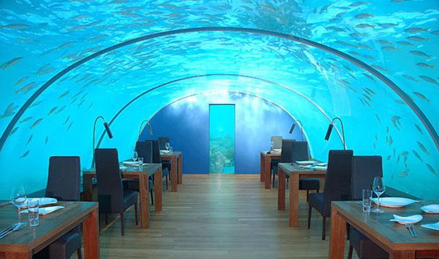 Red-Sea-Star-Underwater