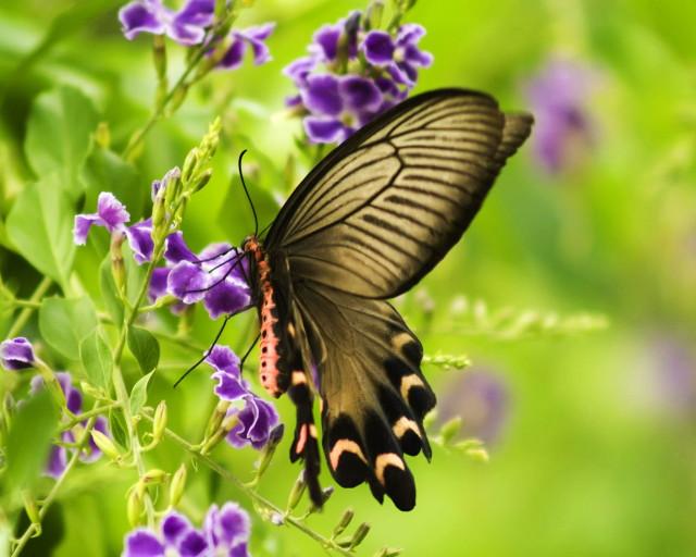 butterfly2_1