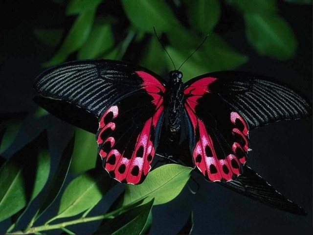 colorful-butterfly-31-wallpaper-background-hd_1