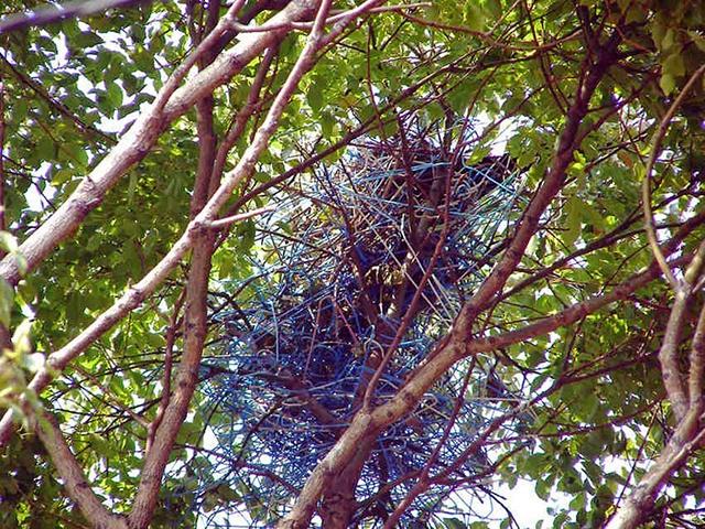 crow-nest-hanger-8[2]