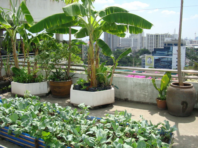 garden-glorious-rooftop-patio-design-with-bananas-trees-also-vegetables-for-amazing-gardening-patio-small-space-inspirations-amazing-rooftop-garden-beautiful-decorations_1