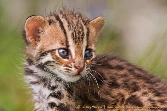 tinycats05