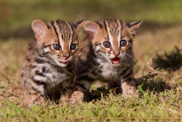 tinycats06