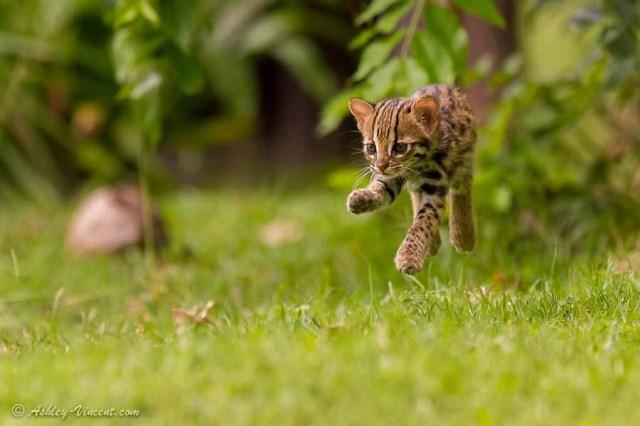 tinycats07