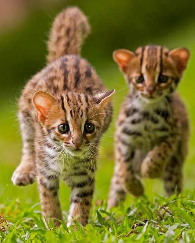 tinycats08