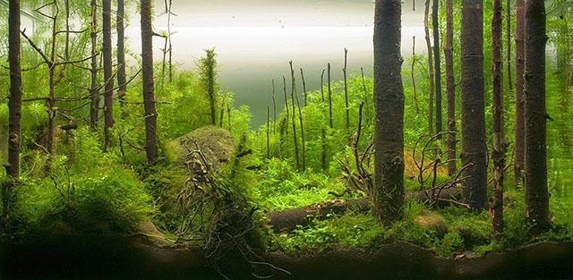 utro v lesu