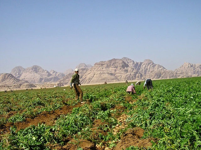 wadi-rum-farming-2[2]