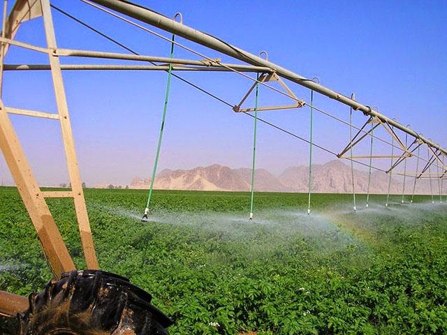 wadi-rum-farming-3[6]