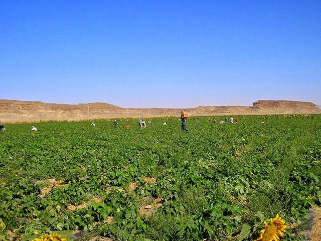 wadi-rum-farming-4[2]