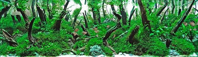 zabutui les