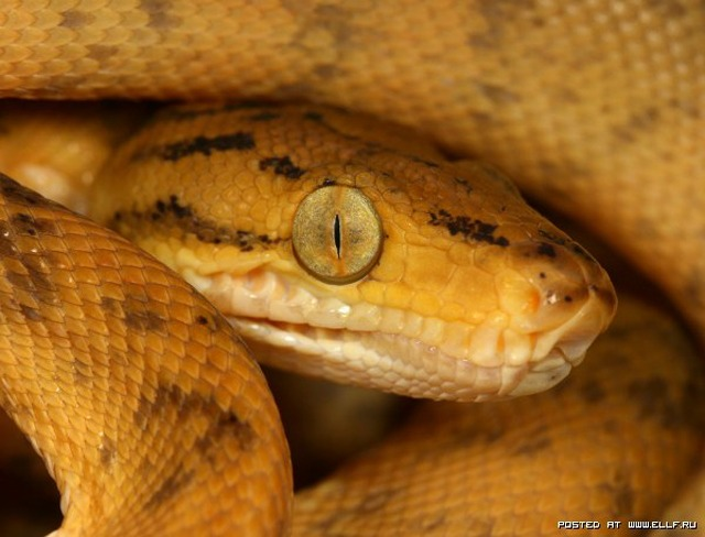 1259097546_snake_macro_by_macrojunkie