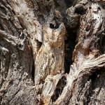 Природная маскировка: животные, которых вы никогда не видели