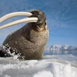 Зимняя сказка от фотографа Пауля Никлена из National Geographic