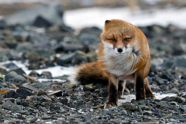 amazing-fox-photos-8_1