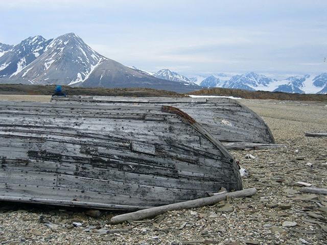 beluga-whale-bones-10[5]