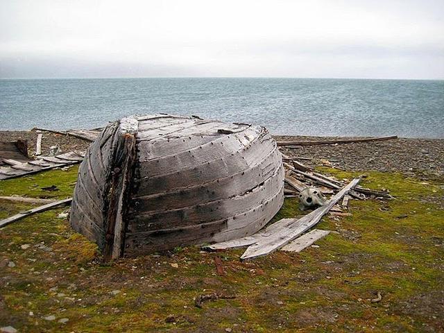 beluga-whale-bones-12[5]