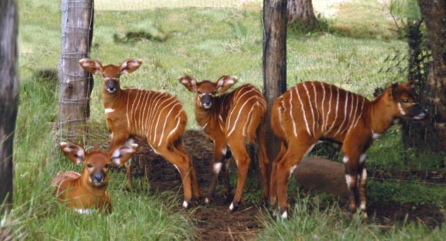 bongo_babies_kenya_print_1_1