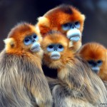Невероятно красивые фотографии из серии «В мире животных»