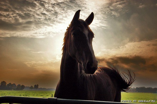 1246987236_flickr-photo-download-horse-at-sunset-37