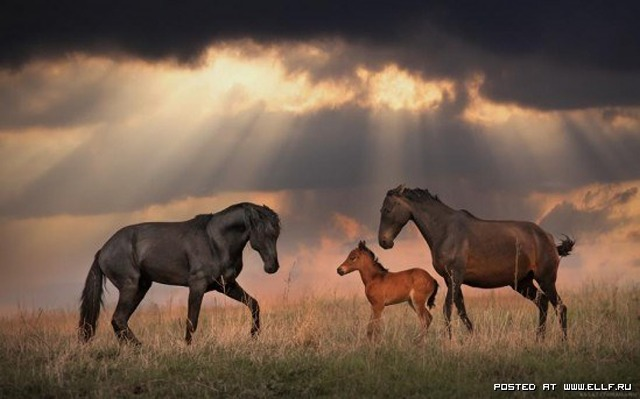 1246987253_horse-creposis-horse-beauty-and-power-horse_large
