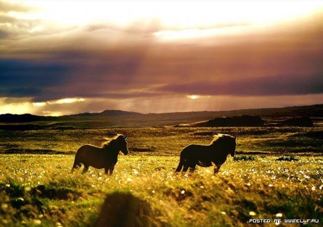 1246987268_flickr-photo-download-sunrayhorses-horse_large