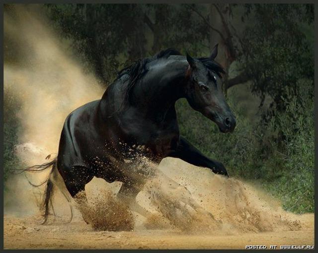 1246987278_horse-horse-withe-album-nature-animals_large