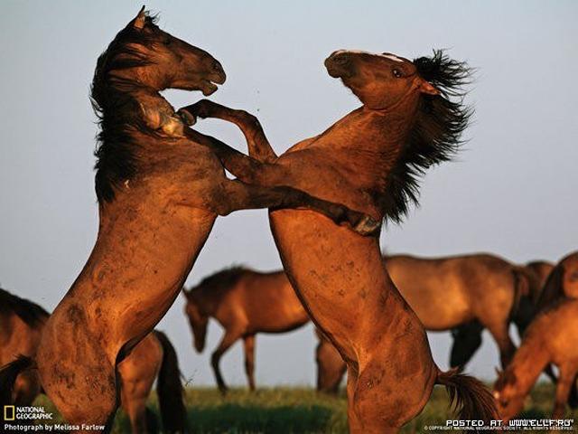 1246987288_dance-dance-nature-rryorirsrsr-animals-horse