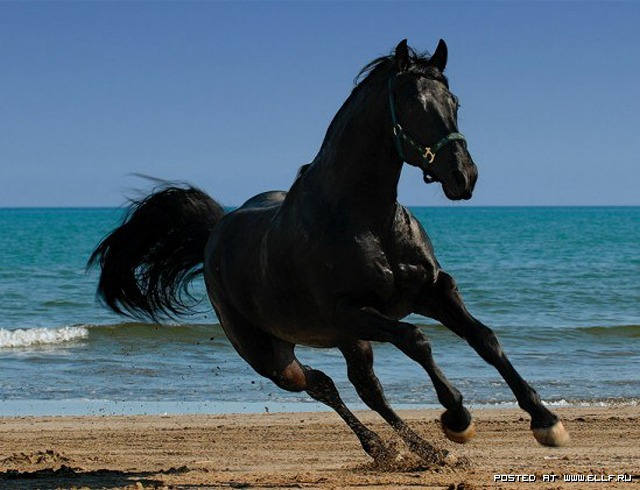 1246987293_horse-by-cangaroo-stunning-pictures-horse-beauty