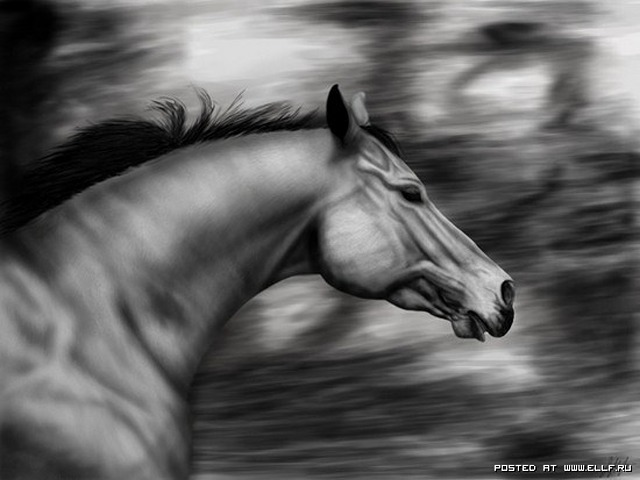 1246987301_animals-terrestrial-horses-wallpaper-wallpaper