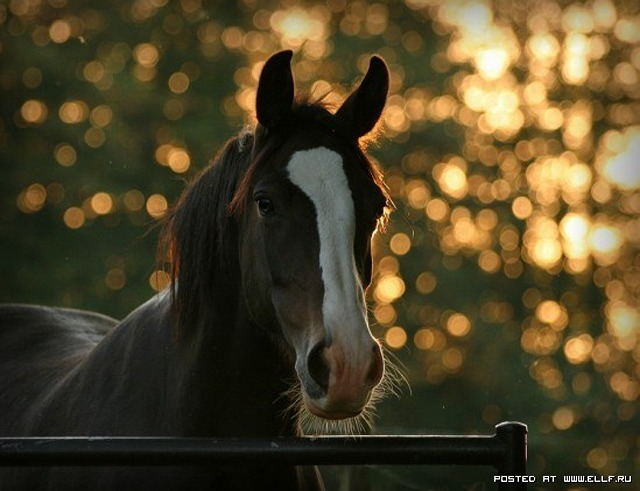 1246987310_by-begonia-uploaded-by-poppy-category-tags-horse