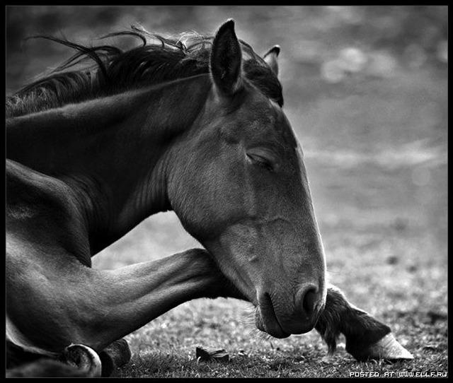 1246987315_horse-horse-beauty-and-power-horse-horses_large