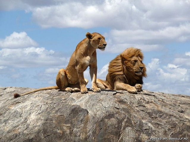 1259096243_loewen-serengeti-popup