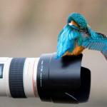 Удачные кадры: удивительные животные и птицы через объектив