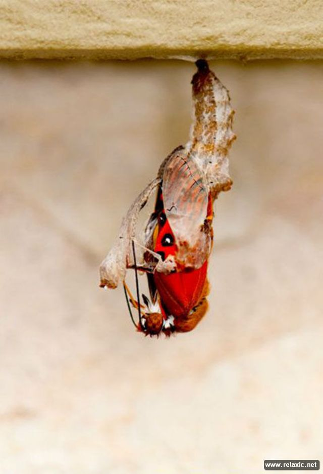 the_birth_of_a_butterfly_04