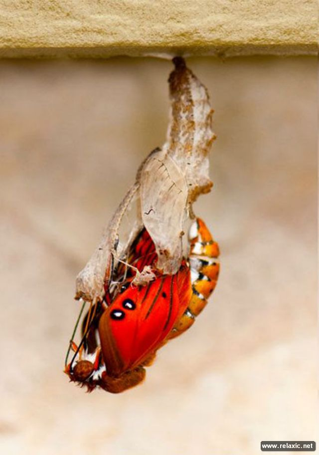 the_birth_of_a_butterfly_05