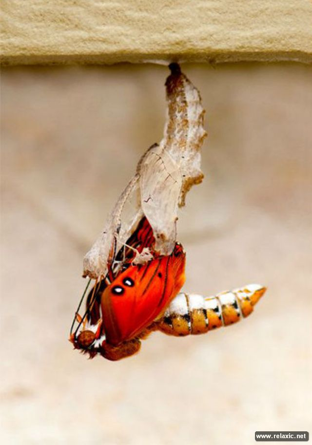 the_birth_of_a_butterfly_06