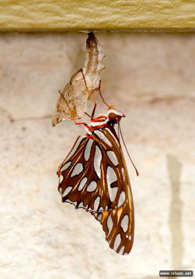 the_birth_of_a_butterfly_09