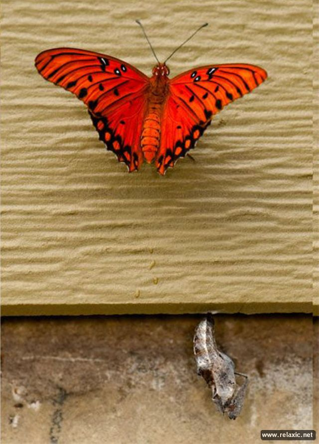 the_birth_of_a_butterfly_10