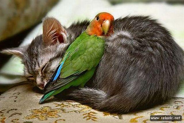 animals_002
