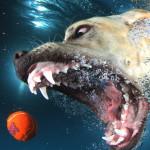 Повседневность с необычного ракурса: Сет Кастиль и его собаки